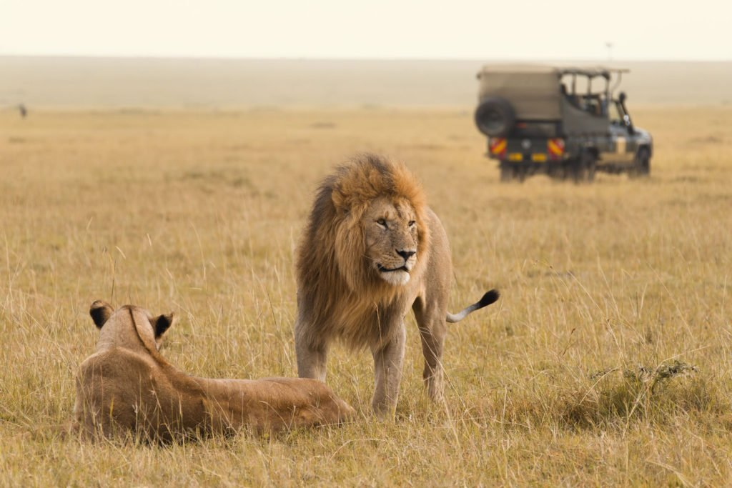 masai-mara-safari-1024x683 - The Holiday Dealers