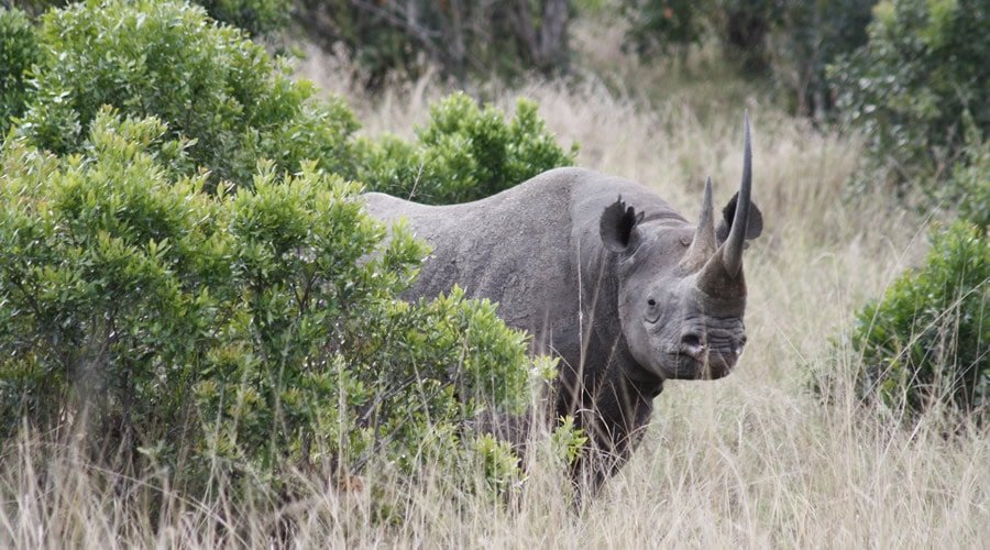 Rhinoceros-African-Animals - List: 20 Must See African Animals When on an African Safari