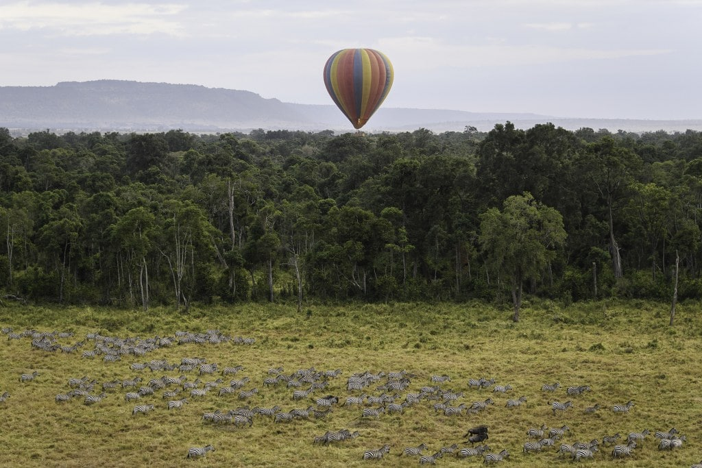 governors_balloon_2016-07-47_1024x683 - List: 20 Must See African Animals When on an African Safari
