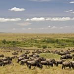 masai-mara-safari-6-150x150 - Kenya and Mauritius Honeymoon Holiday Package