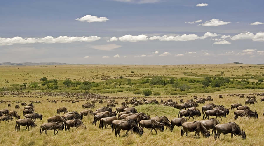 masai-mara-safari-6 - Kenya and Seychelles Honeymoon Safari Holiday Package