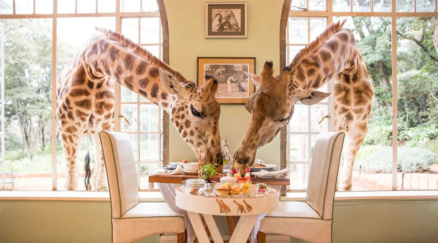 Giraffe-Manor - Kenya in Pictures: 10 Beautiful Places to Photograph