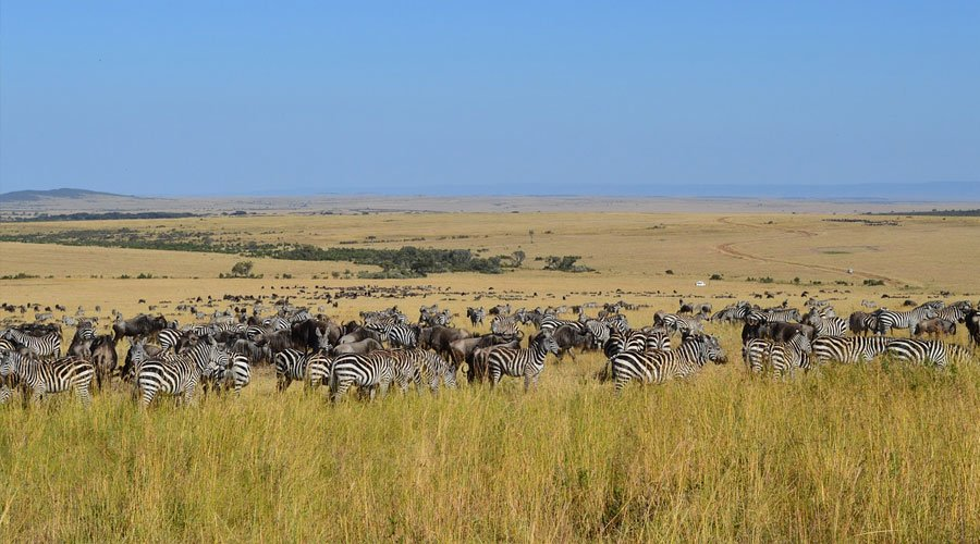 Maasai-Mara-National-Reserve - Kenya in Pictures: 10 Beautiful Places to Photograph